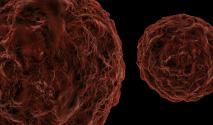 img_bio_hepatite-intro